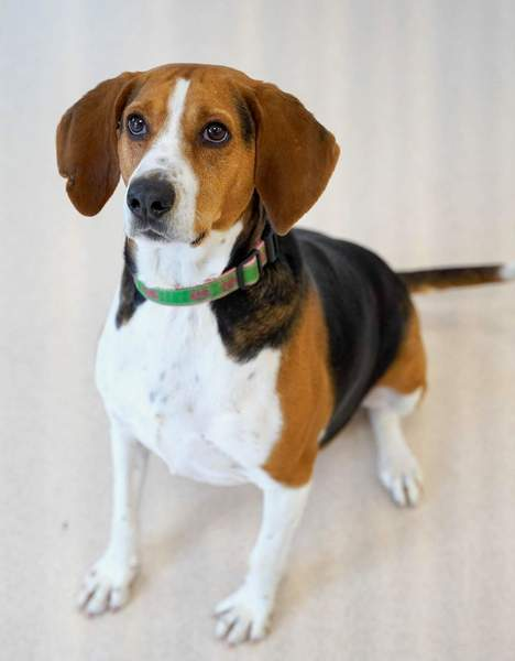 Rescue Of The Month Pope Memorial Humane Society Of Knox County By Susan Spisak Downeast